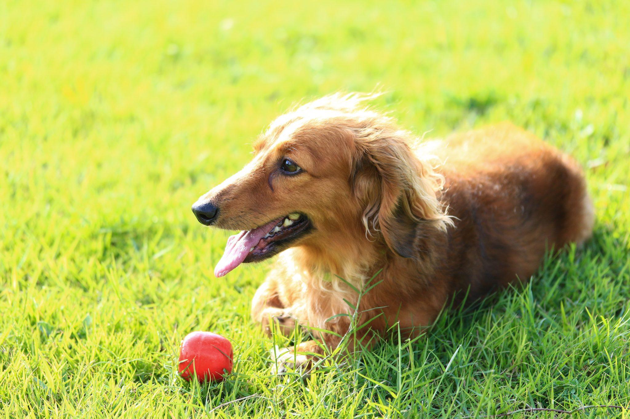 犬の日とは?由来もかわいいワンワンワン♪日本犬って実はわずか〇種類!