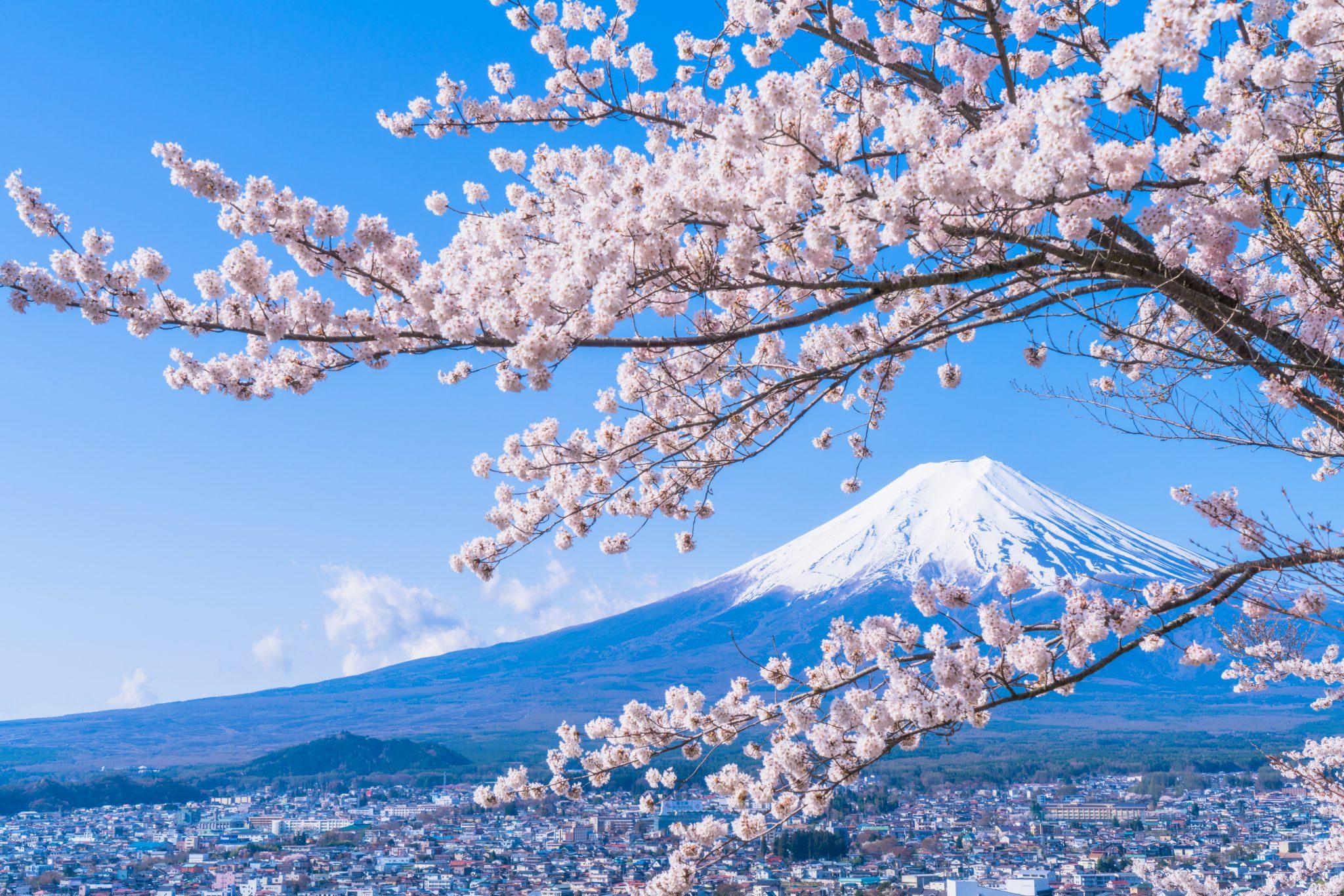 さくらの日(桜の日)とはいつ?意味や由来は?イベントや記念日 ...