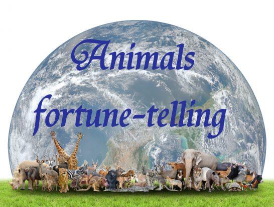無料 動物 占い
